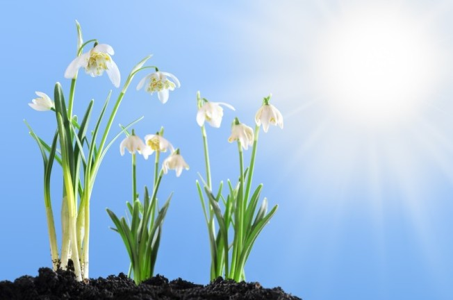 Springtime awakens